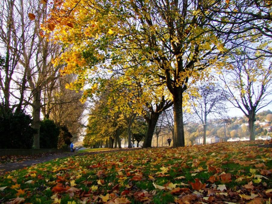 The Marina in Autumn splendour