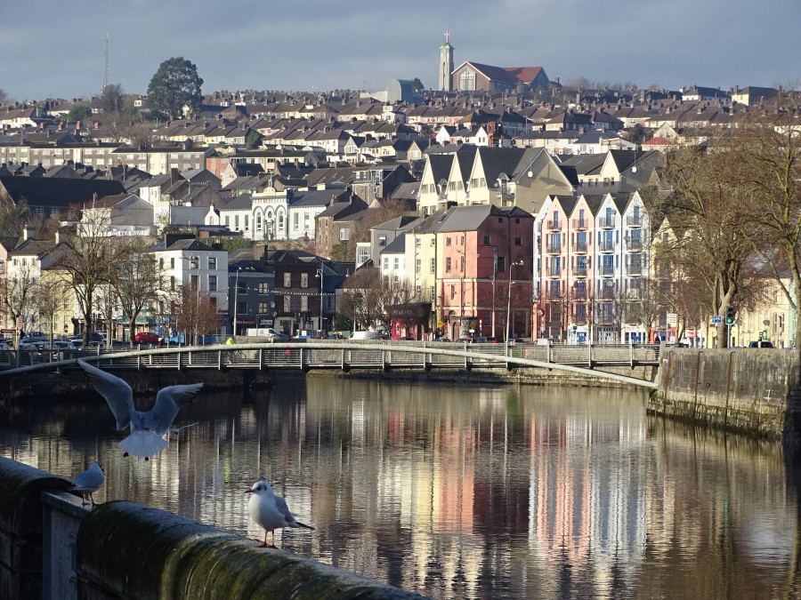 North Channel of River Lee, Cork City, December 2019  (picture: Kieran McCarthy)