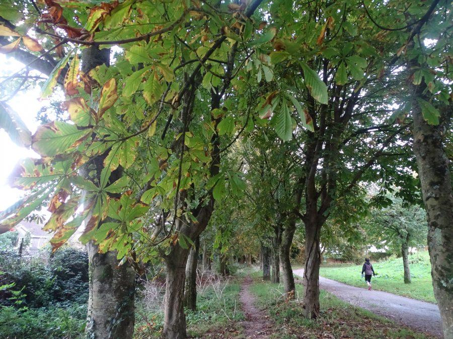 Beaumont Park, Cork, October 2020 (picture: Cllr Kieran McCarthy)
