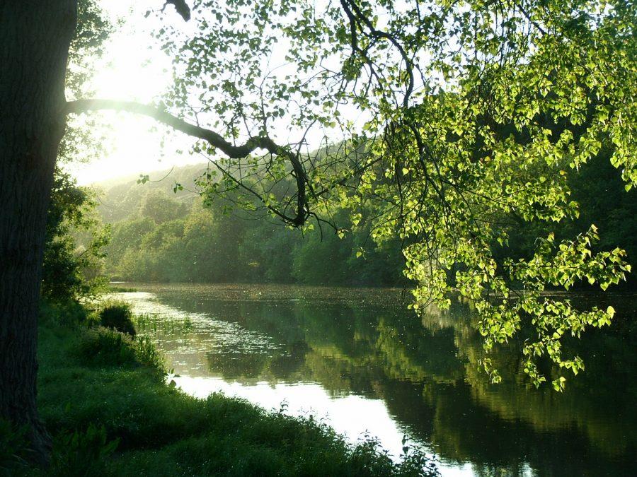 Reflections on the River Lee, Lee Fields, Cork (picture: Kieran McCarthy)