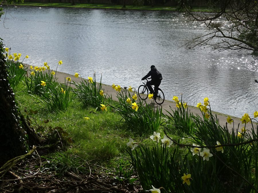 Atlantic Pond, Cork, Present Day (Kieran McCarthy)
