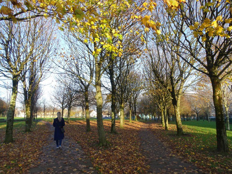 Gerry O'Sullivan Park, Churchfield, Cork, Mid November 2020 (picture: Kieran McCarthy)