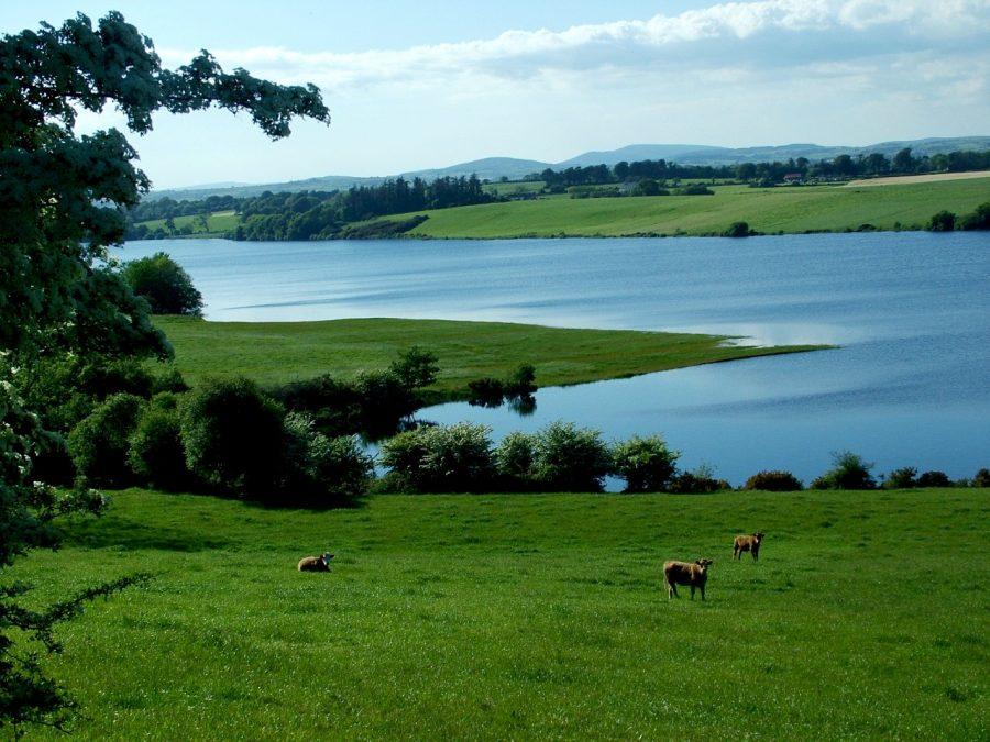 Inniscarra Reservoir Lake, Co. Cork from near Farren (picture: Kieran McCarthy)