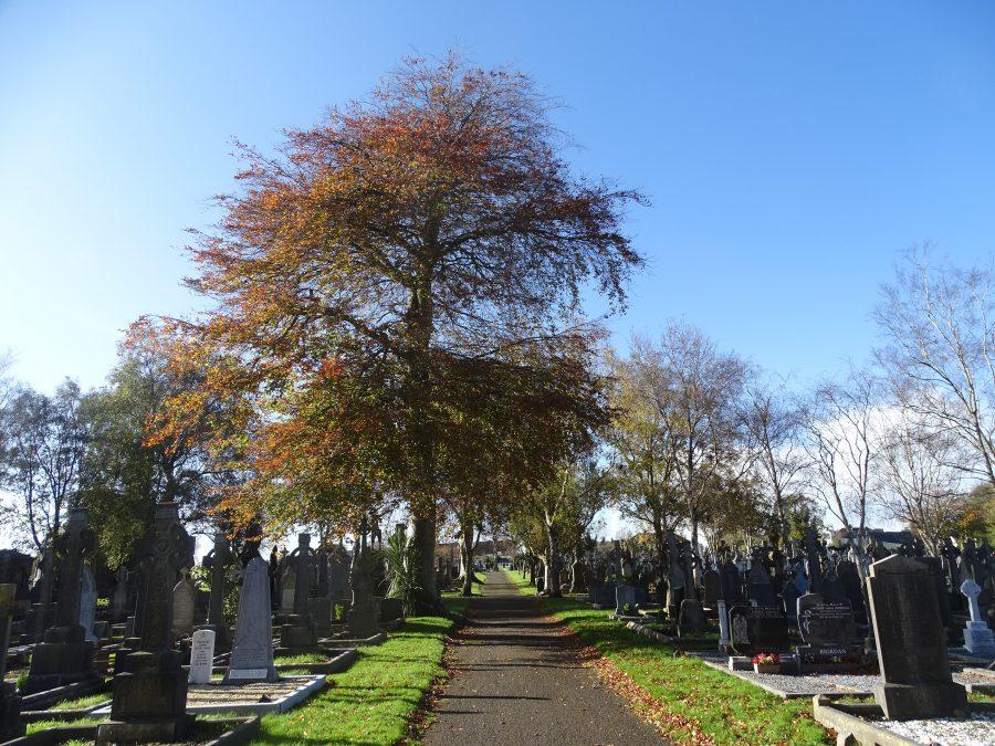 St Finbarr's Cemetery, Cork, October 2020 (picture: Cllr Kieran McCarthy)