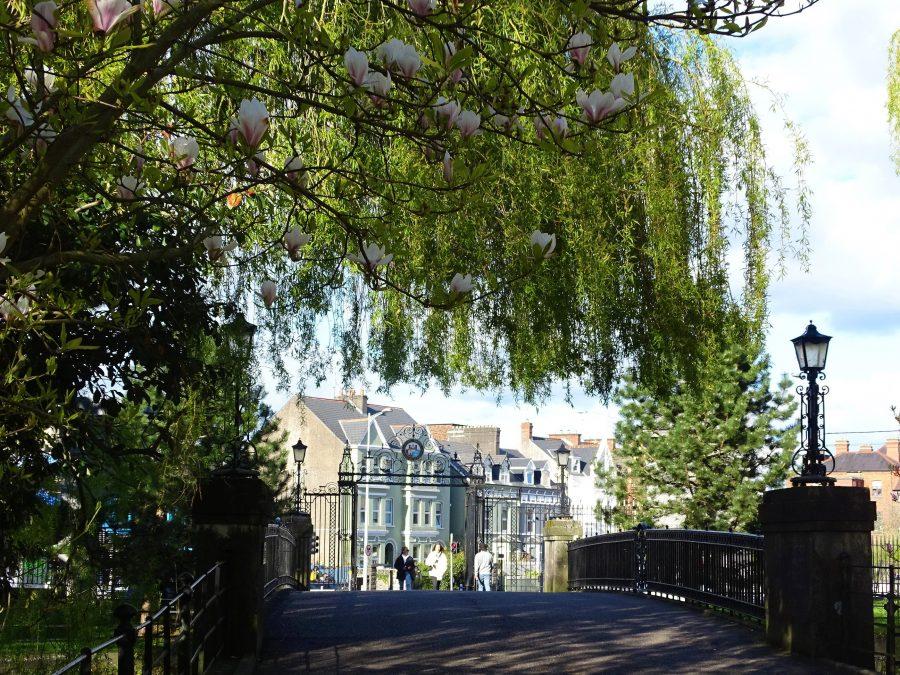 Spring Aspirations, Gates to UCC, Cork, early April 2021 (picture: Kieran McCarthy)