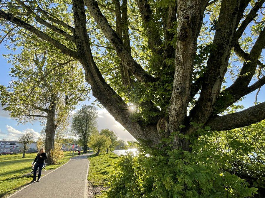 Lee Fields, Cork, early May 2021 (picture: Cllr Kieran McCarthy)
