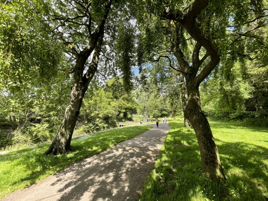 Summer sunshine on a pathway at the Atlantic Pond, Cork, 6 June 2021 (picture: Kieran McCarthy)